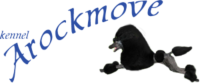 Arockmove Logotyp