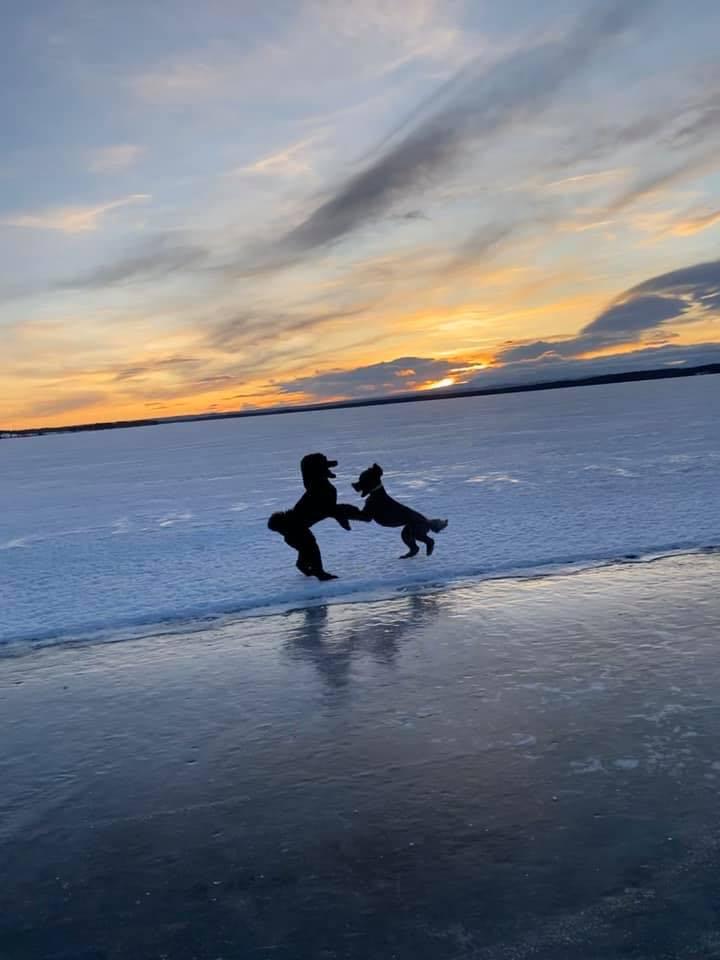Blixt och Brunett på isen
