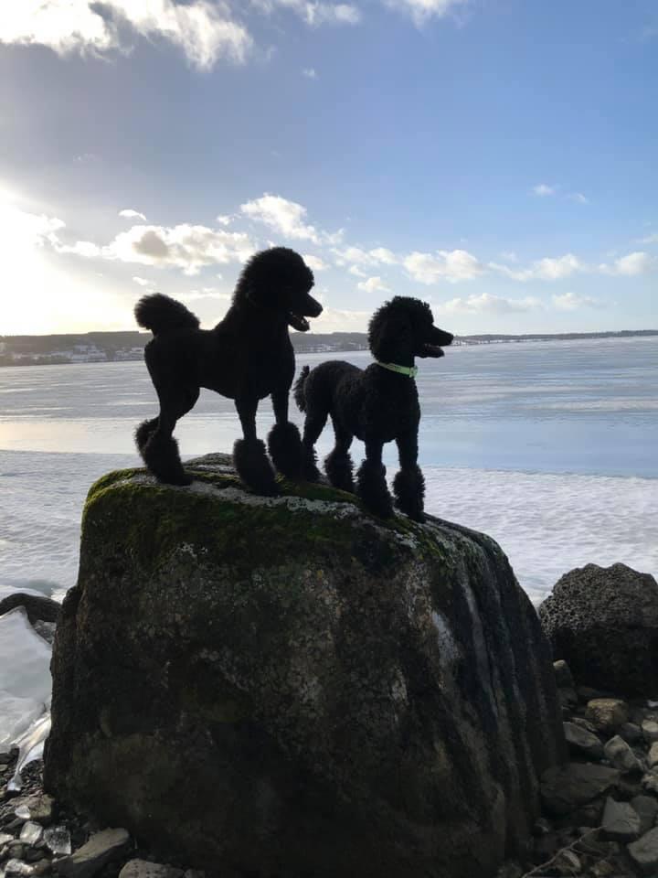 Blixt och Chilla på sten